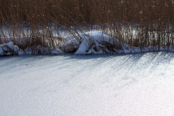葦原雪景色_c0067040_214039100.jpg