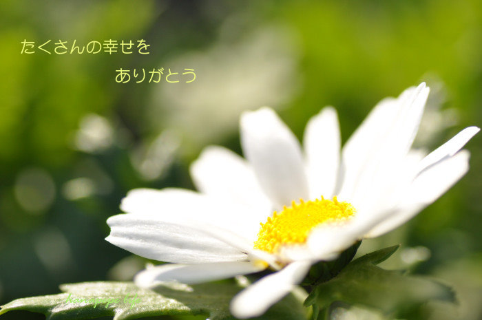a0145741_21394815.jpg