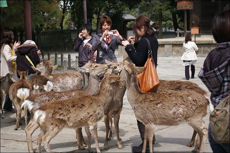 奈良之鹿_c0073742_2223644.jpg