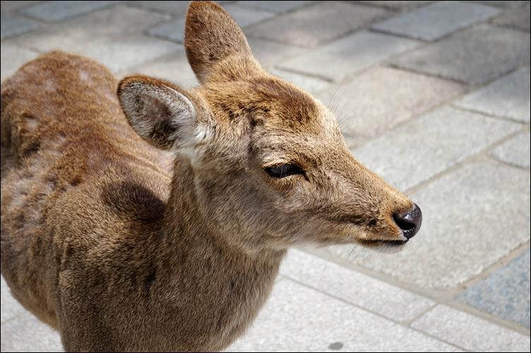 奈良之鹿_c0073742_2362964.jpg