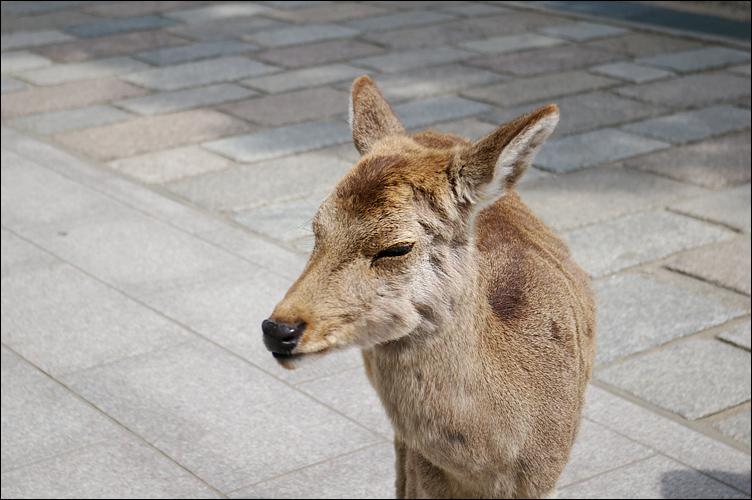 奈良之鹿_c0073742_328962.jpg