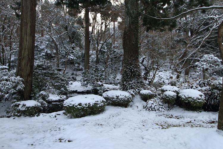 雪の三千院_e0051888_17152366.jpg