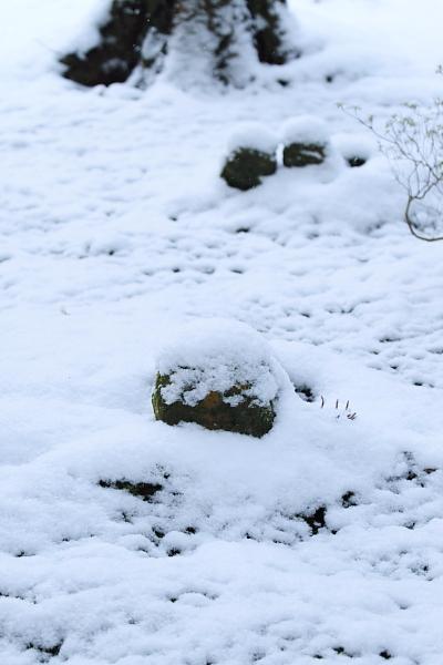 雪の三千院_e0051888_17164883.jpg