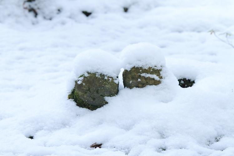 雪の三千院_e0051888_17171787.jpg