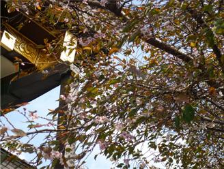 お寺の庭の「落葉掃き」_f0194518_23262168.jpg