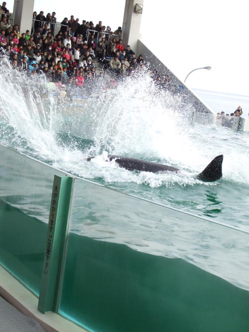 鯨…いや迎春!_f0060530_2033377.jpg