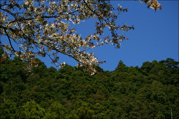 熊野三山 ── 那智御瀧 ~ 飛瀧神社_c0073742_1341126.jpg