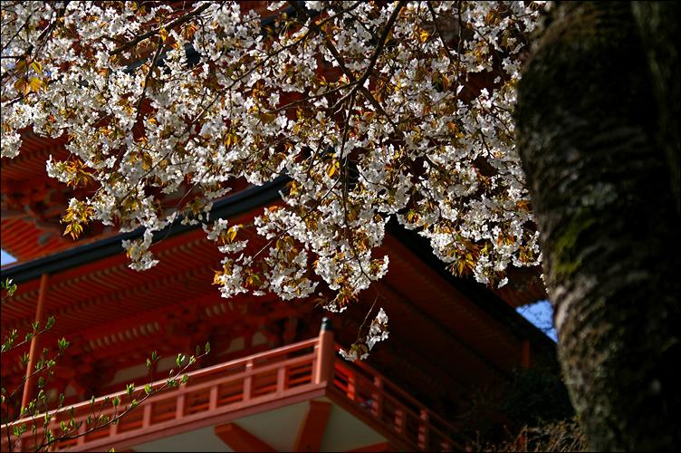 熊野三山 ── 那智御瀧 ~ 飛瀧神社_c0073742_135097.jpg