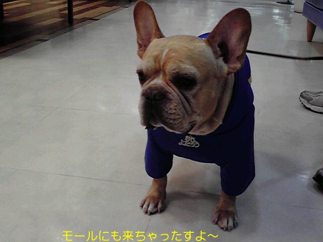 ☆謹賀新年☆_f0090344_0522827.jpg
