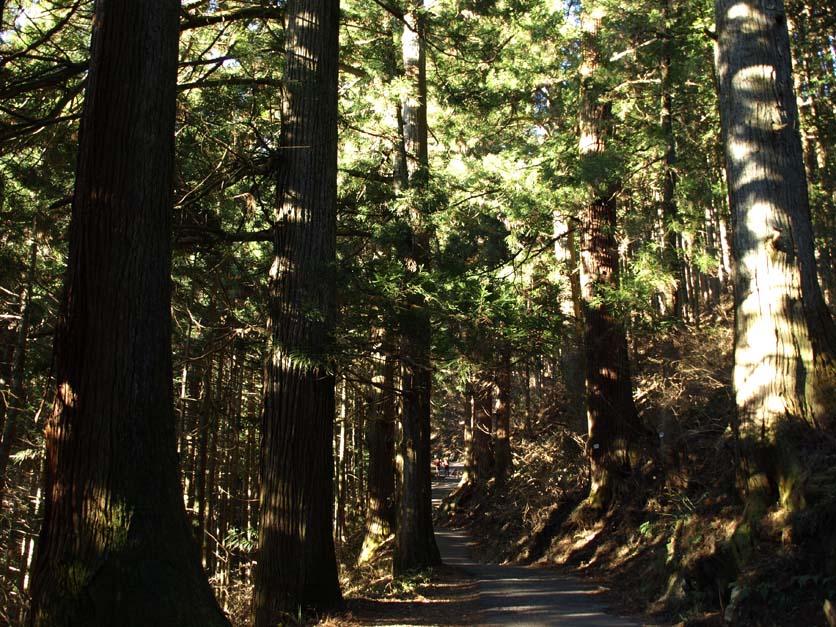 御嶽神社につながる800本の杉の参道_d0149245_7274060.jpg