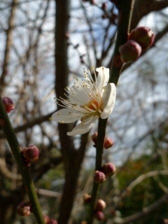 お隣の梅が咲き・・・仕事始め。_f0177373_1962135.jpg