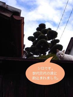 b0177078_1001065.jpg