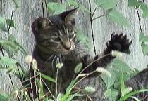 叔父の通夜/マーロン・ブランドのすべて~ゴッドファーザーの猫@  NHK BS hi/6日音の素・猫展開幕_f0006713_6192623.jpg