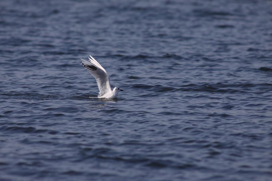 初撮りで海へ_c0001429_12225628.jpg