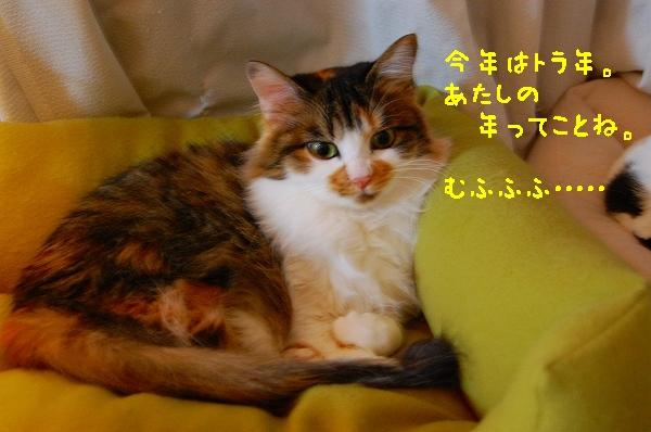 c0181639_12617.jpg