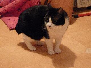 ノーカット猫 空編。_a0143140_17435145.jpg