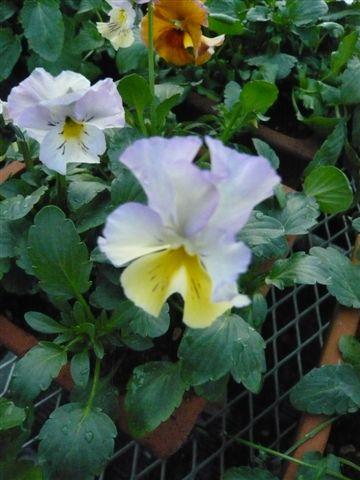 今年の秋の候補生・・・・・ROKAさんの育種場・・・・秘密の花園へ_b0137969_1801199.jpg