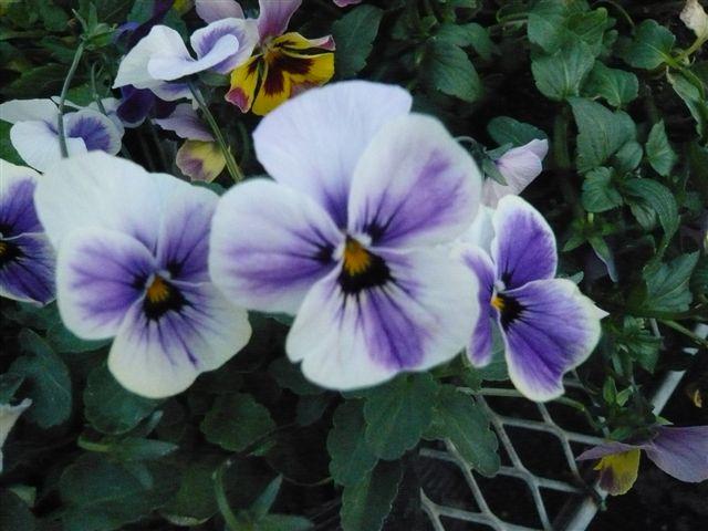 今年の秋の候補生・・・・・ROKAさんの育種場・・・・秘密の花園へ_b0137969_1805087.jpg