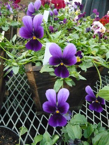 今年の秋の候補生・・・・・ROKAさんの育種場・・・・秘密の花園へ_b0137969_1834280.jpg