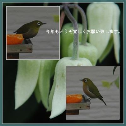 今年もどうぞよろしくお願いいたします。深川七福神めぐり_c0051105_23232881.jpg