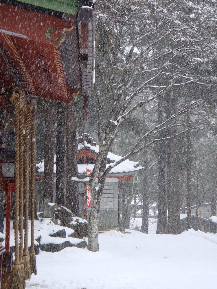本日も雪降り_c0111229_17432638.jpg