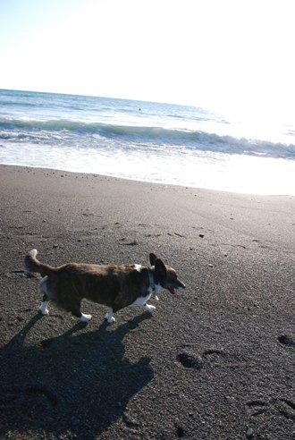 海岸にて_c0099133_21551650.jpg