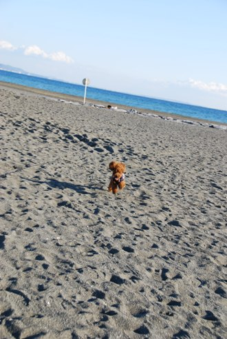 海岸にて_c0099133_21554555.jpg