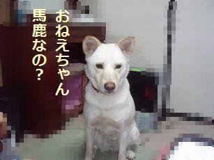 f0195543_2227881.jpg