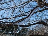 初春の富士_f0019247_1923263.jpg