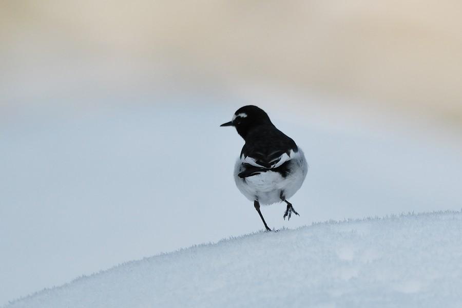 残雪の中で・・_c0124055_046336.jpg