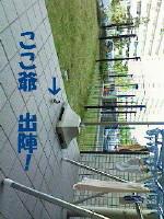 b0158061_21441632.jpg