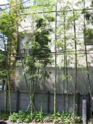結局は自分の近くから緑を考え住宅へに生かす   川口通正_d0021969_15273693.jpg