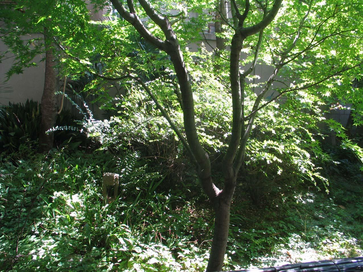 結局は自分の近くから緑を考え住宅へに生かす   川口通正_d0021969_1551148.jpg