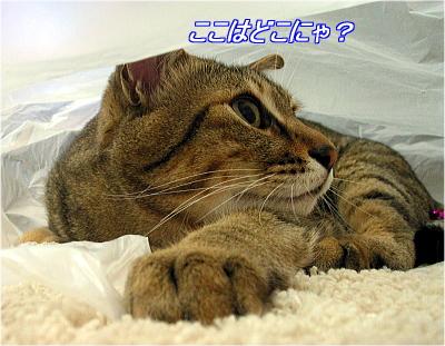 b0097848_19482421.jpg