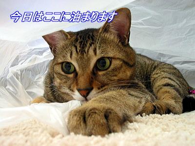 b0097848_1949576.jpg
