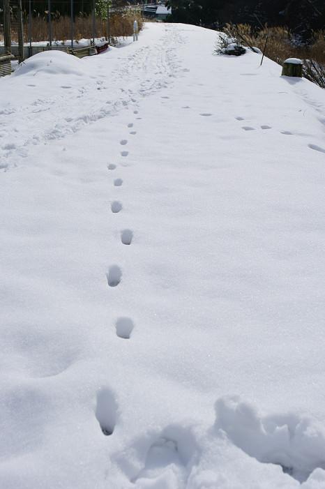 雪だるま..._f0152550_22253443.jpg