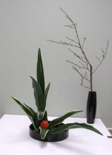 正月花 おもとを生ける_c0165824_1842318.jpg