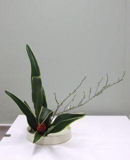 正月花 おもとを生ける_c0165824_1843817.jpg