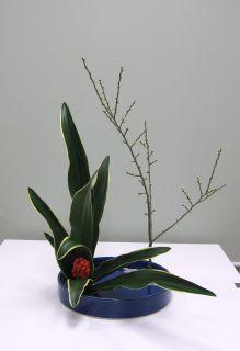 正月花 おもとを生ける_c0165824_1845829.jpg