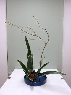 正月花 おもとを生ける_c0165824_1851390.jpg