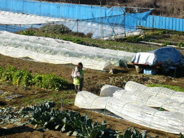 今朝は某取材・・・佳里菜・・・籠一杯の野菜・・_c0222448_22335829.jpg
