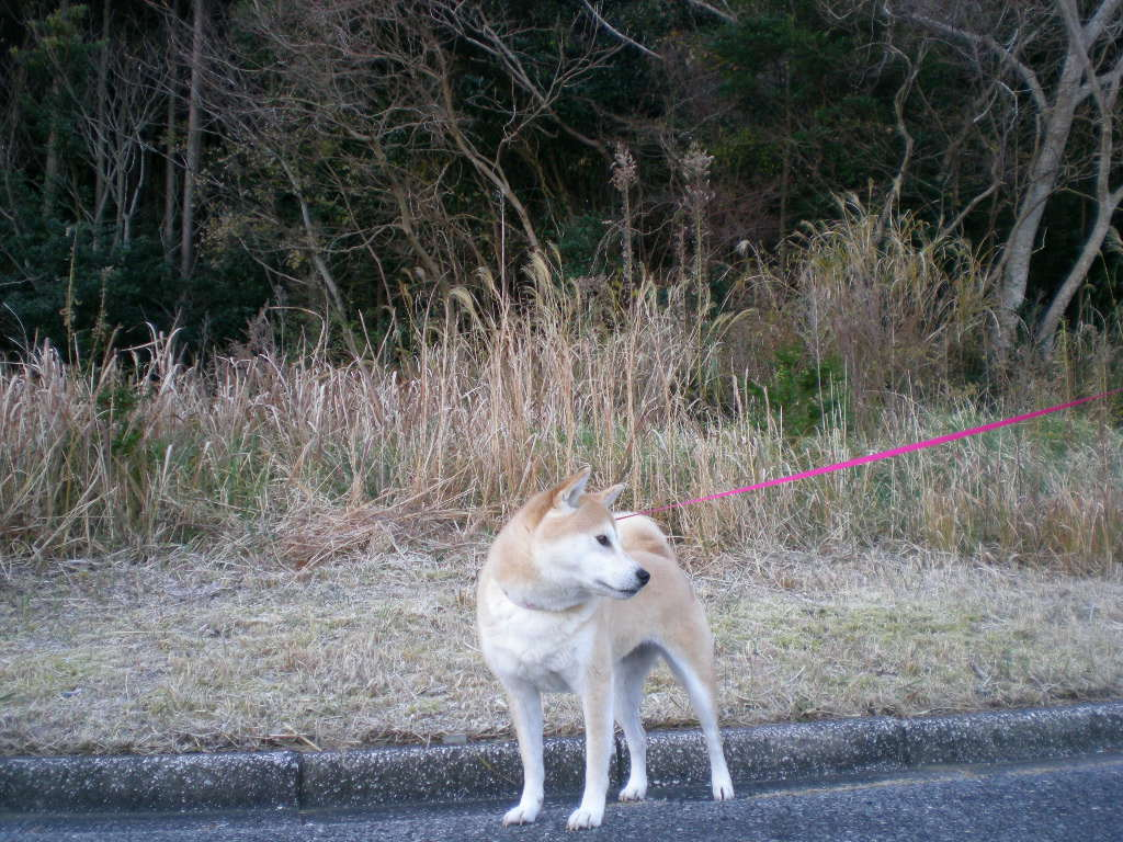 2010年1月8日(金)愛ちゃんとこころちゃんの生中継!_f0060461_11354574.jpg