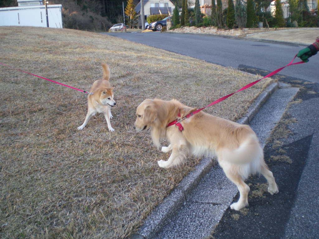 2010年1月8日(金)愛ちゃんとこころちゃんの生中継!_f0060461_1138211.jpg
