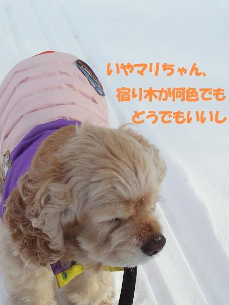 b0067012_110853.jpg