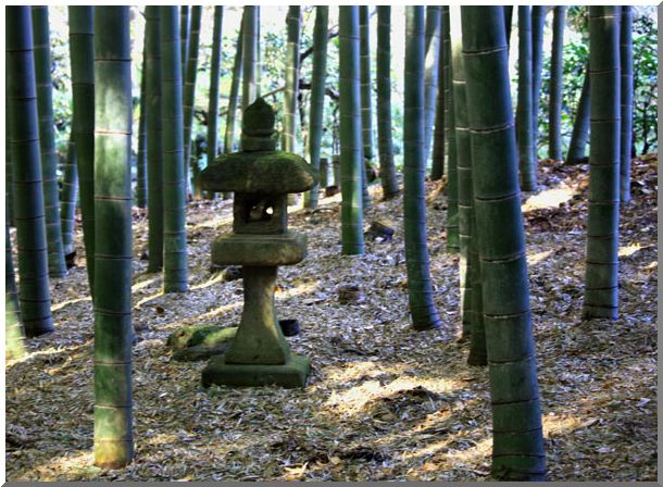 報国寺・竹の庵(鎌倉)NOⅠ_d0123528_11284335.jpg
