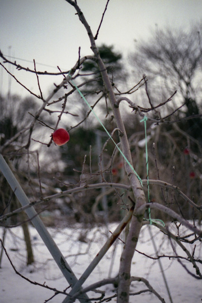 雪のうえに残されたもの_c0157248_12184216.jpg