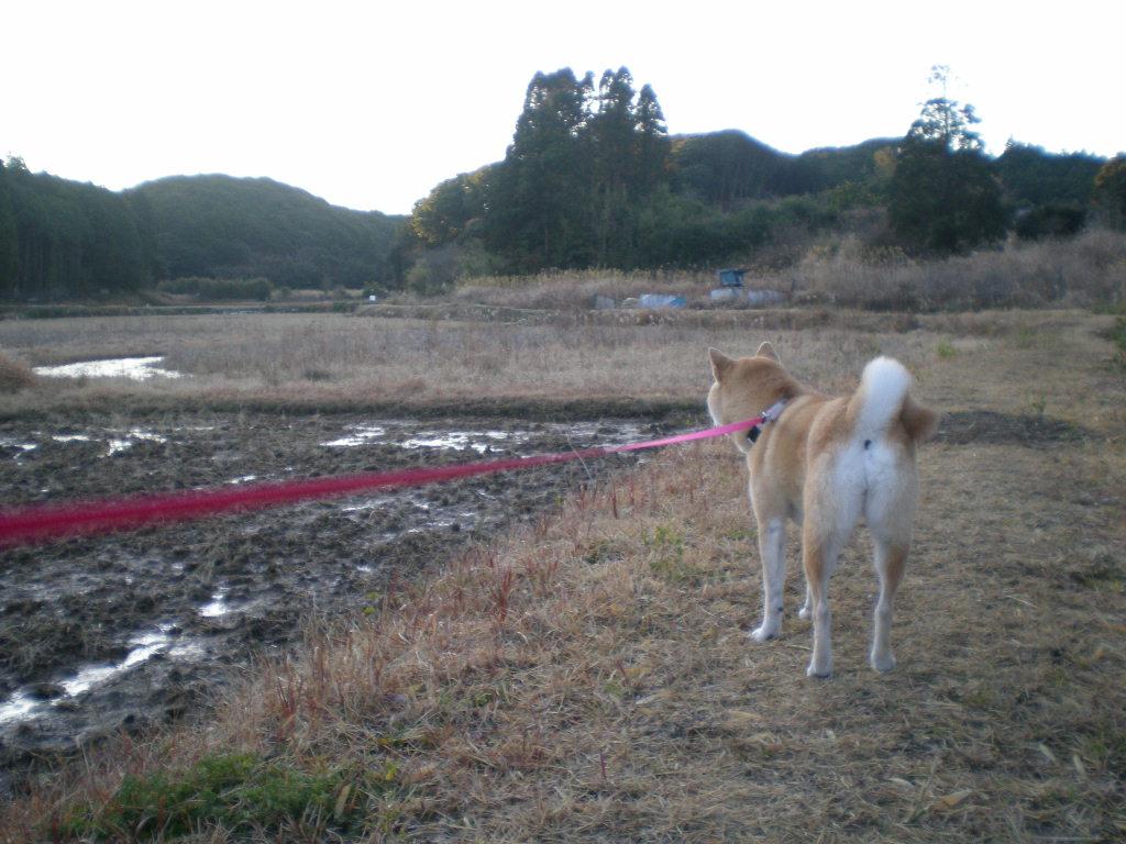 2010年1月9日(土)今日も寒いけど水彩画!_f0060461_13235594.jpg