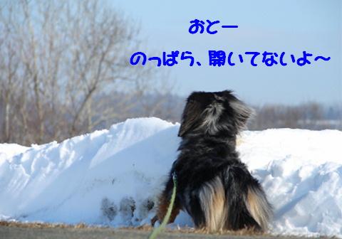 真冬のお散歩アイテム_f0195891_171227100.jpg