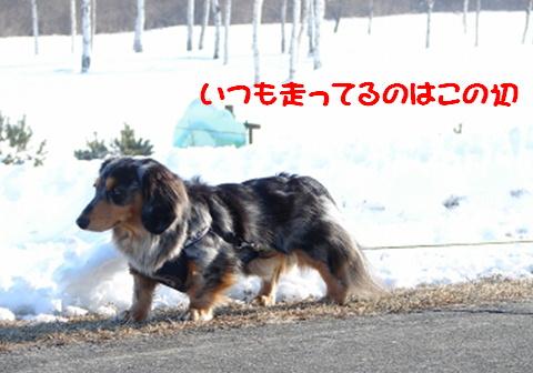 真冬のお散歩アイテム_f0195891_17124726.jpg