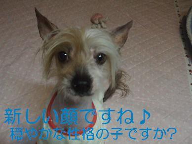 f0179203_9355046.jpg